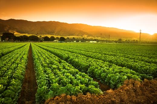 کشاورزی در استان مرکزی
