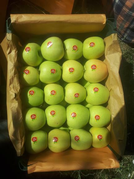 سیب پیرانشهر