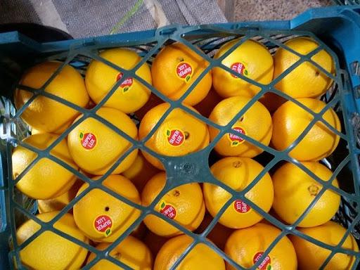 پرتقال والنسیا داراب