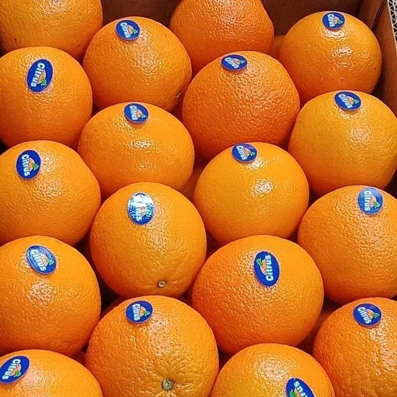 پرتقال والنسیا نوشهر