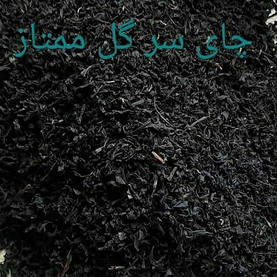 پخش و فروش انواع چای بهاره ۱۴۰۰ لاهیجان
