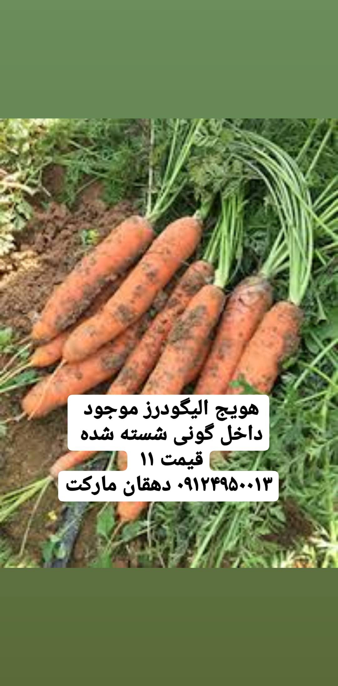 هویج ِالیگودرز شسته