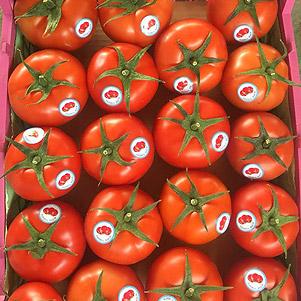 گوجه 8320