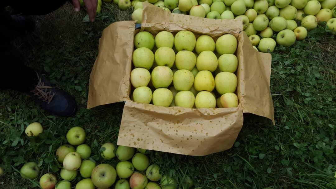 سیب سبز ارومیه