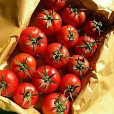 گوجه همدان